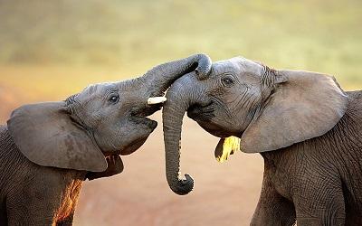 Преимущество двух слонов в эндшпиле