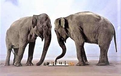 Слоновые окончания